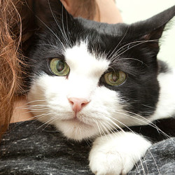 Caring for your new cat or kitten