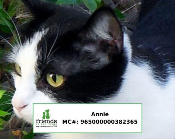 Annie (Adopted)