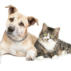We offer subsidised de-sexing & microchipping!