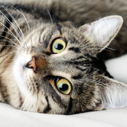 Can YOU foster a cat?
