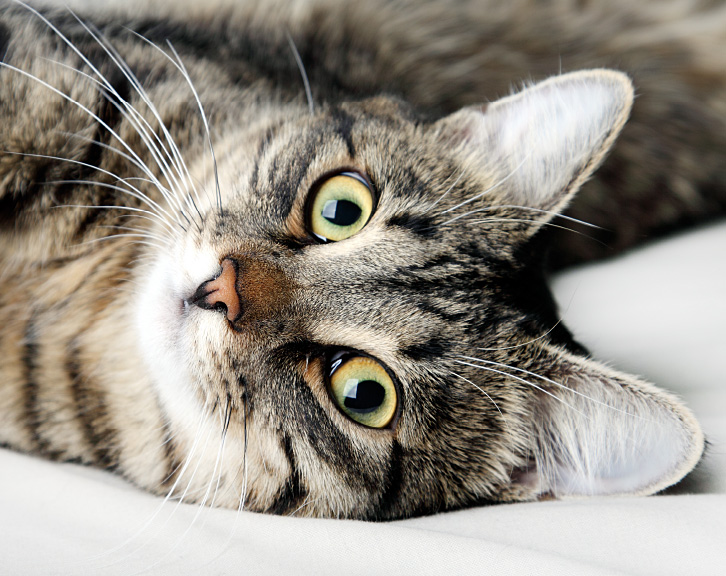 Can YOU foster a cat? - Friends of the Pound
