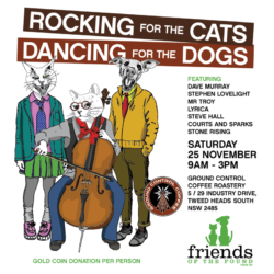 Rocking for the cats 'n' Dancing for the dogs