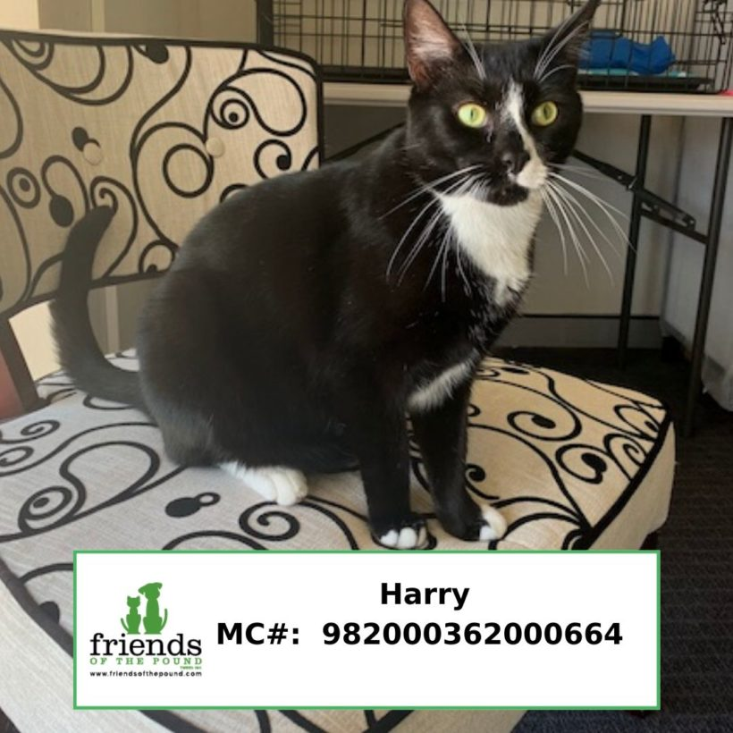 Harry (Adopted)