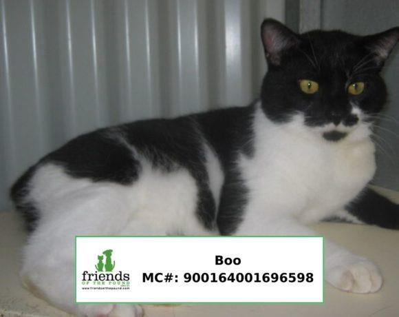 Boo (Adopted)
