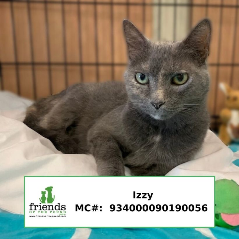 Izzy (Adopted)