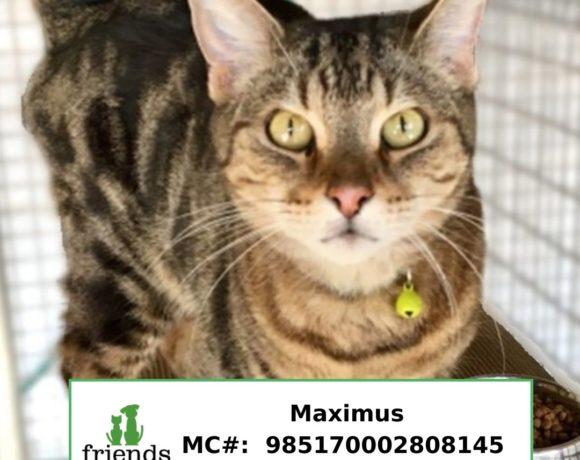 Maximus (Adopted)