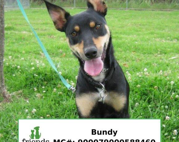 Bundy (Adopted)
