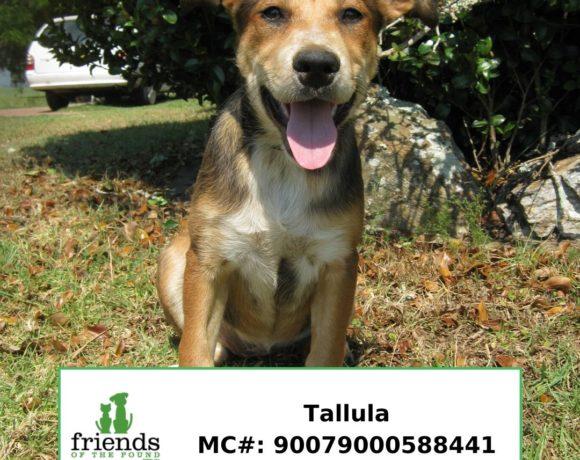 Tallula (Adopted)