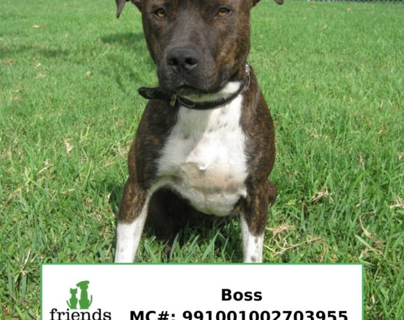 Boss (Adopted)