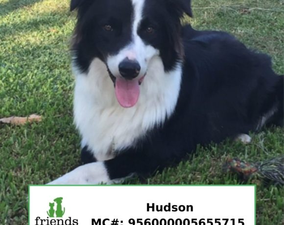 Hudson (Adopted)