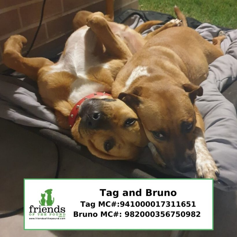 Bruno and Tag