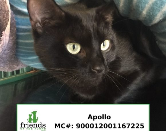 Apollo (Adopted)