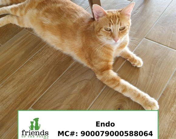 Endo (Adopted)