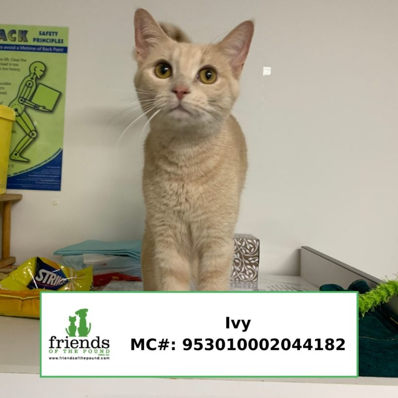 Ivy (Adopted)