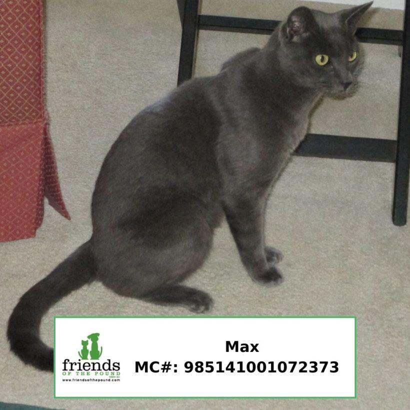 Max (Adopted)