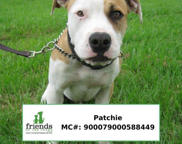 Patchie