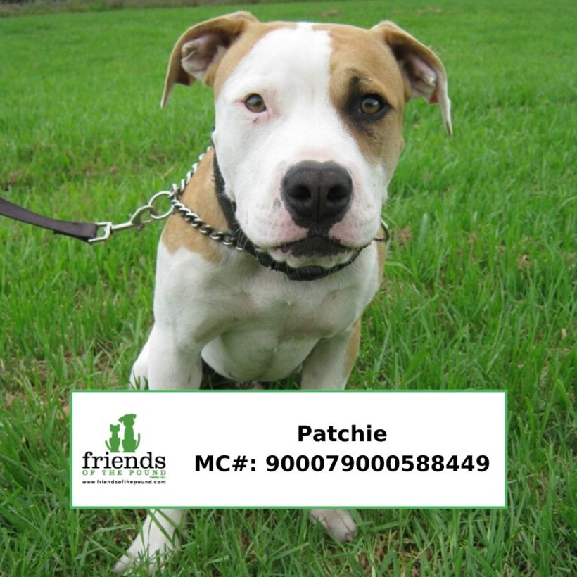 Patchie (Adopted)