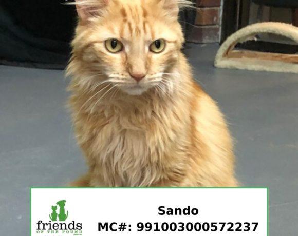 Sando (Adopted)