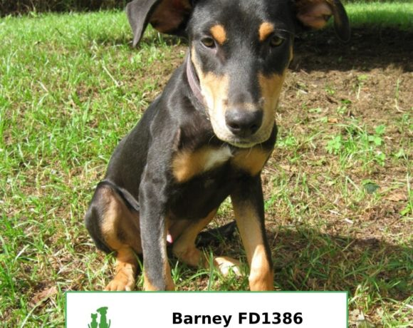 Barney (Adopted)