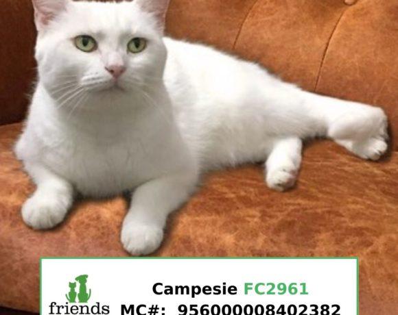 Campesi (Adopted)