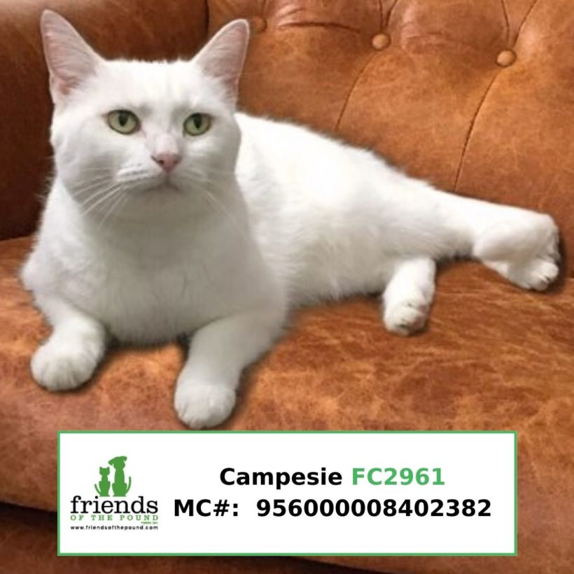 Campesi (Adopted)