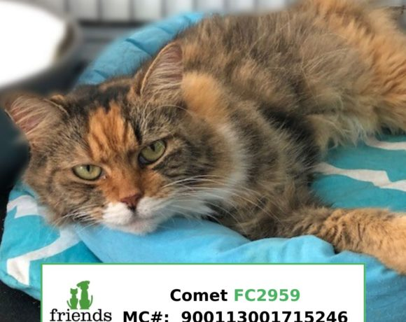Comet (Adopted)
