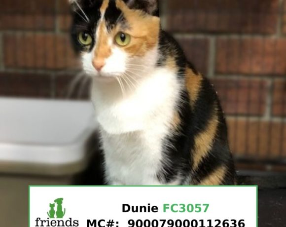 Dunie (Adopted)