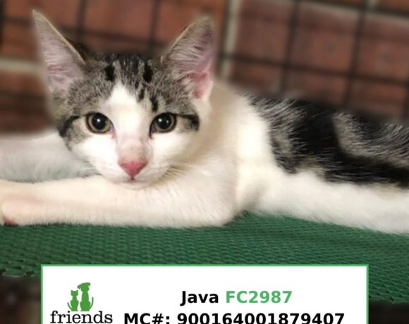 Java (Adopted)