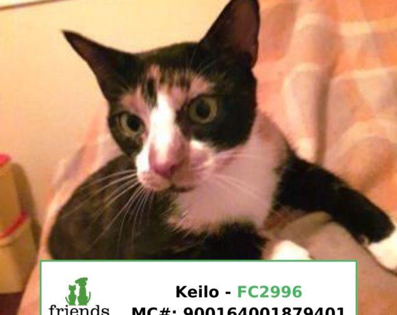 Keilo (Adopted)