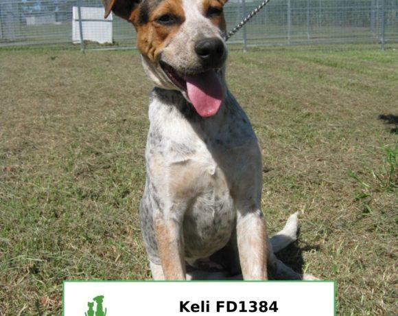 Keli (Adopted)