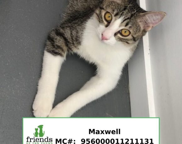Maxwell (Adopted)