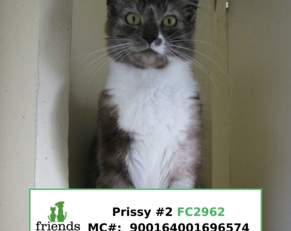 Prissy (Adopted)