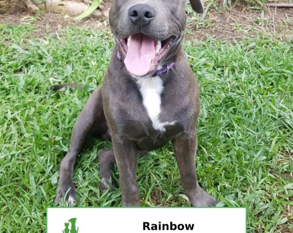 Rainbow (Adopted)