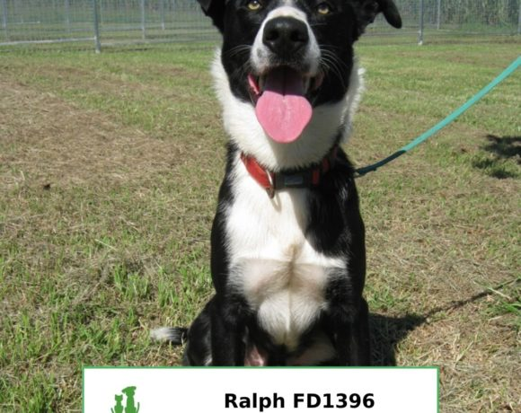 Ralph (Adopted)