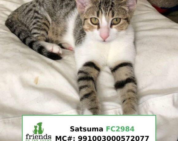 Satsuma (Adopted)