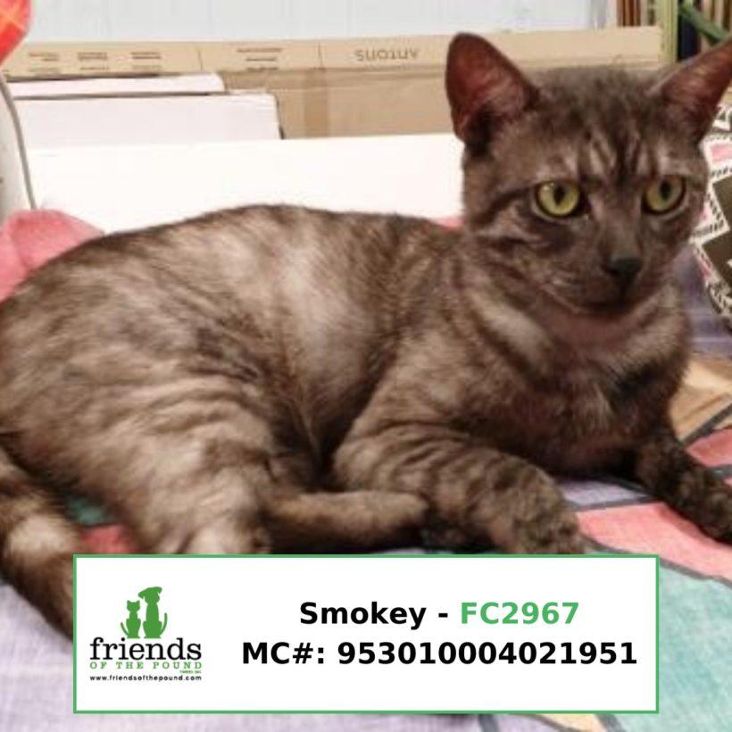 Smokey (Adopted)
