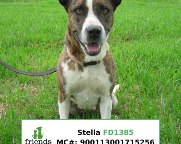 Stella (Adopted)