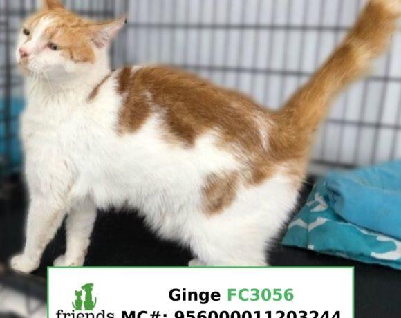 Ginge (Adopted)