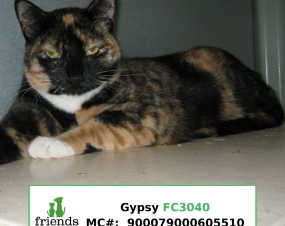 Gypsy (Adopted)