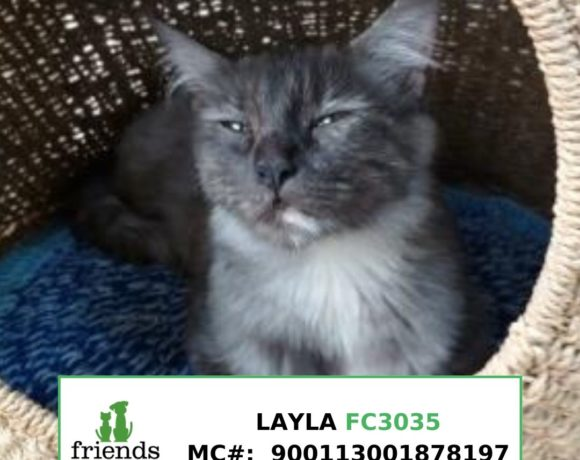 Layla (Adopted)