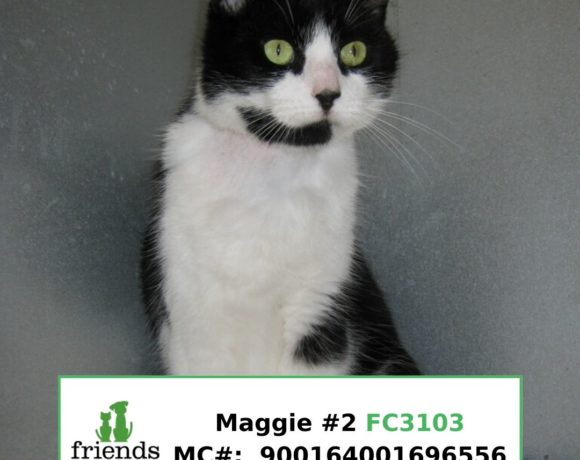 Maggie (Adopted)