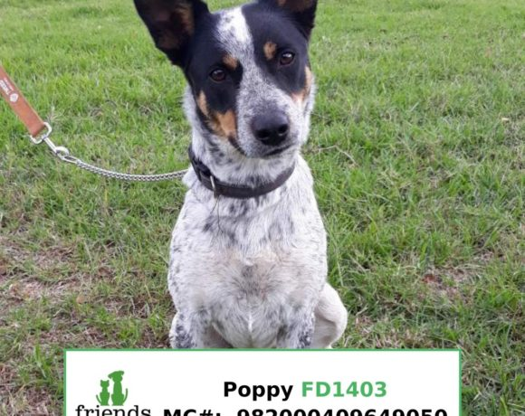 Poppy (Adopted)