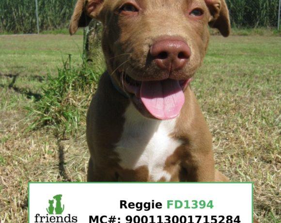 Reggie (Adopted)