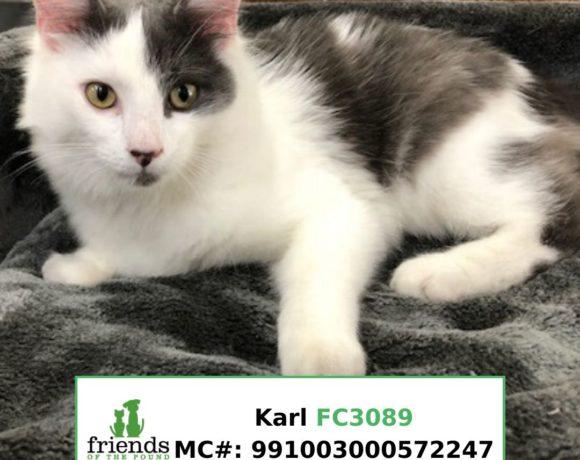 Karl (Adopted)