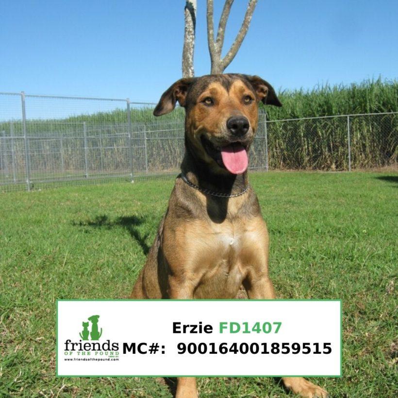 Erzie (Adopted)