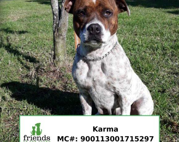 Karma (Adopted)