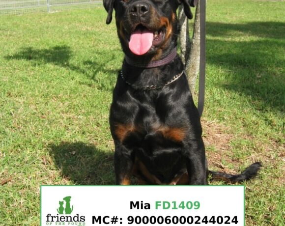 Mia (Adopted)