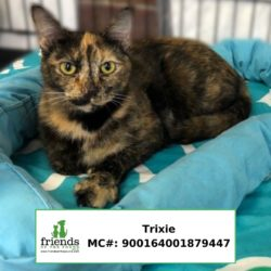 Trixie (Adopted)