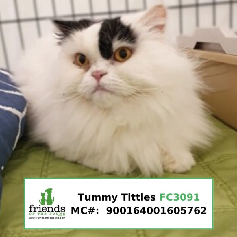 Tummy Tuttles