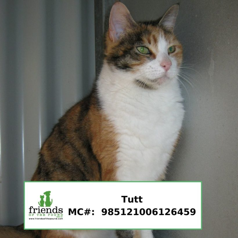 Tutt (Adopted)